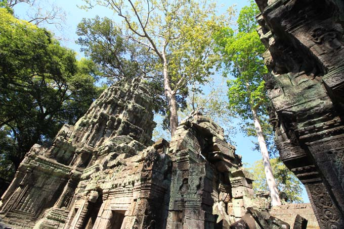Ta Prohm Temple-37