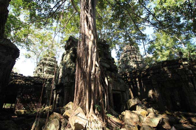 Ta Prohm Temple-38