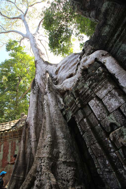 Ta Prohm Temple-45