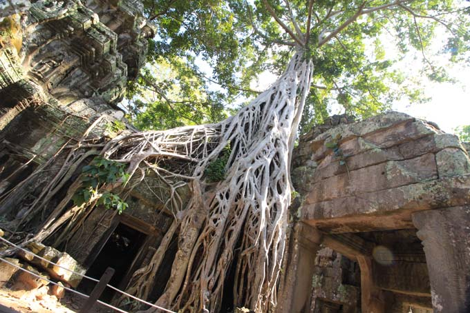 Ta Prohm Temple-56