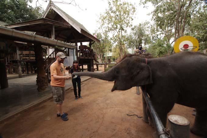 Taweechai Elephant Camp-02