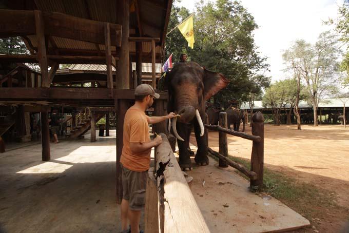 Taweechai Elephant Camp-05