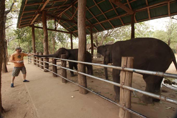 Taweechai Elephant Camp-07