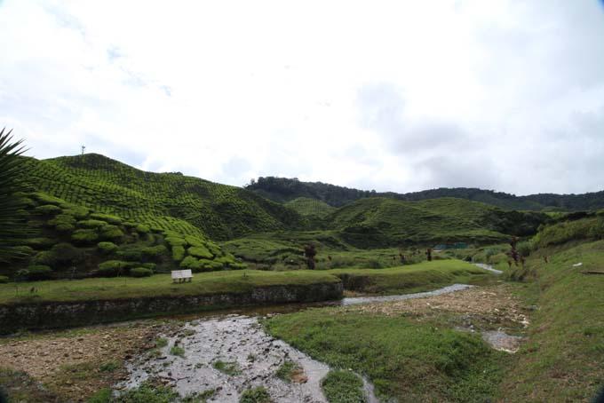 Baharat Tea Plantation-08