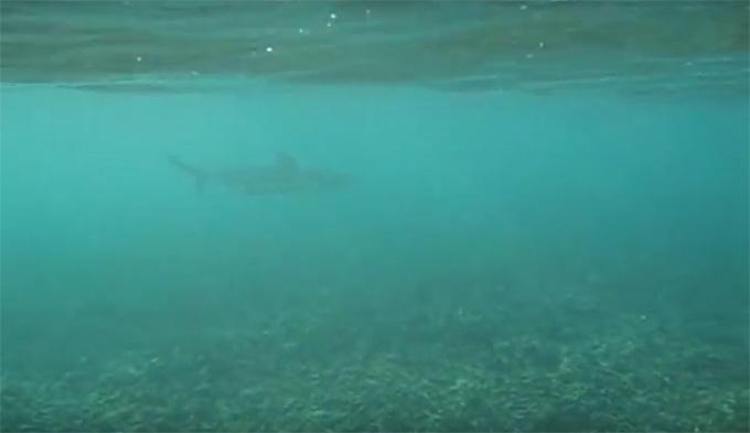 Koh Tao-Shark Bay-13
