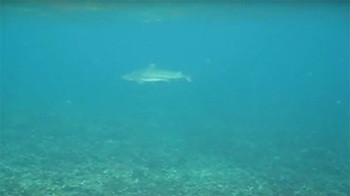 Koh Tao-Shark Bay-14