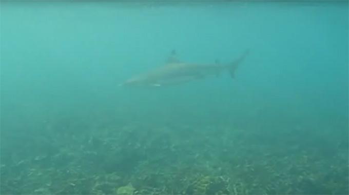 Koh Tao-Shark Bay-15
