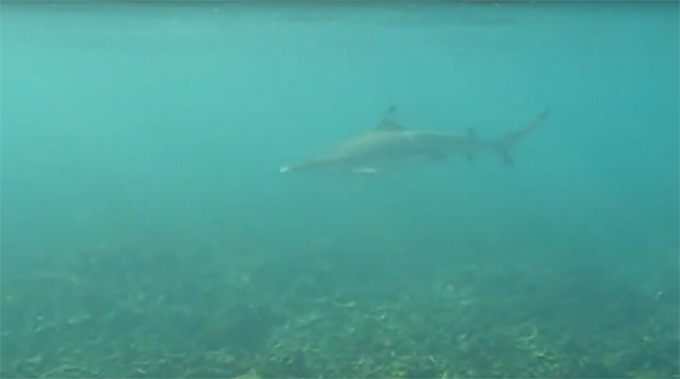 Koh Tao-Shark Bay-16