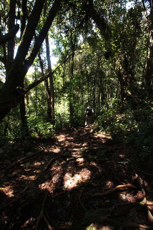 Mount Brinchang-13